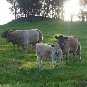 Khapremax™: Feed Supplement Formula for large herd livestock